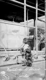 Buster, USS Cumberland Mascot, Dog, Guantanamo, Cuba, 1915